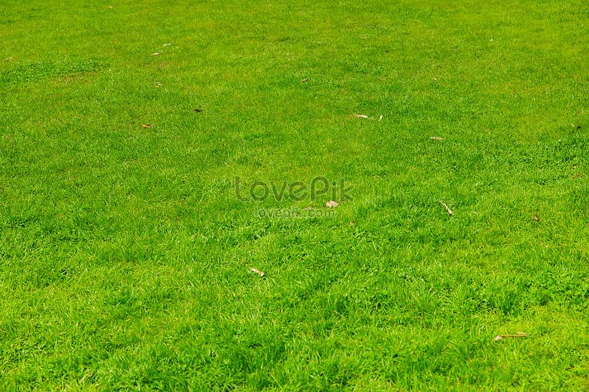 53 Gambar Rumput Terlihat Keren