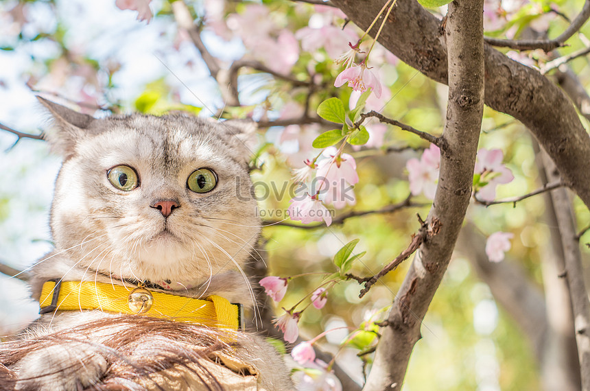 Funny Cat Photo Image Picture Free Download 501268603 Lovepik Com