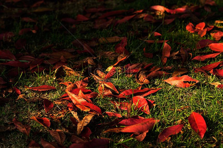 Lovepik صورة Jpg 501292107 Id صورة فوتوغرافية بحث صور أحمر الأوراق المتساقطة البلاط