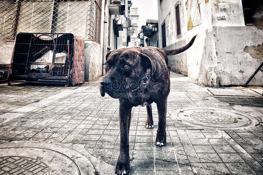 Anjing Pemburu Gambar Unduh Gratis Foto 501298916 Format Gambar Jpg Lovepik Com