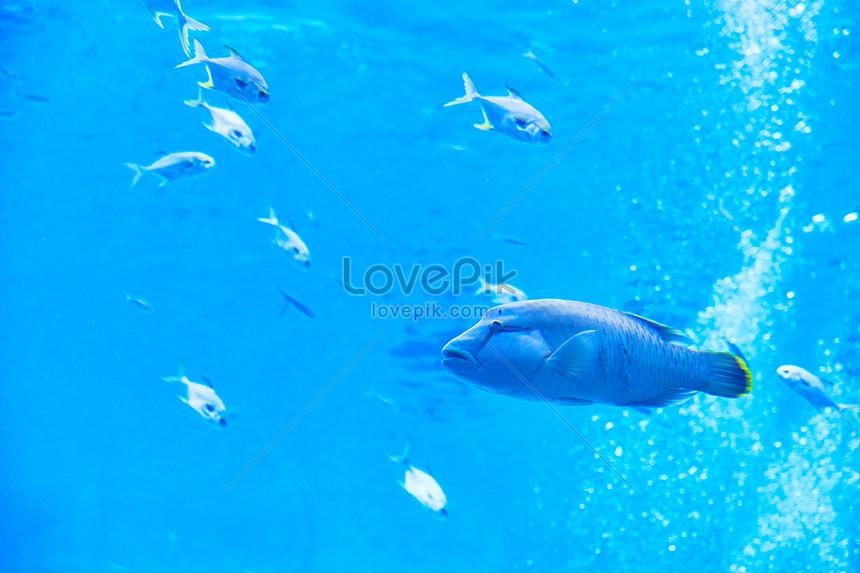 denizaltı balığı