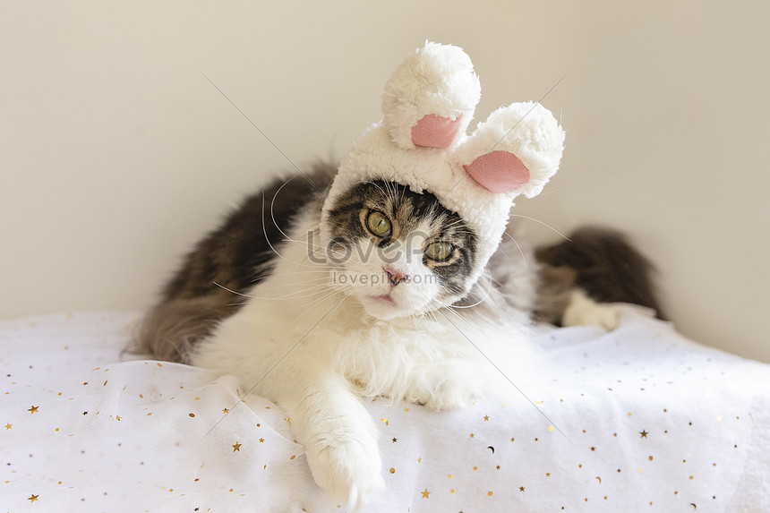 Maine Cat Wearing A Hat Photo Image Picture Free Download 501381272 Lovepik Com