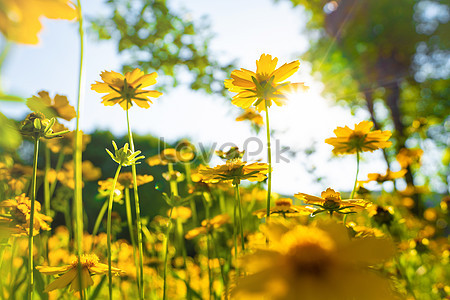 462 Bunga Matahari Pusat Bunga Musim Panas Kuning Tumbuhan Alam