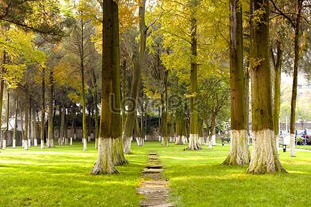 97000 Natural Landscape Hd Photos Free Download Lovepik Com