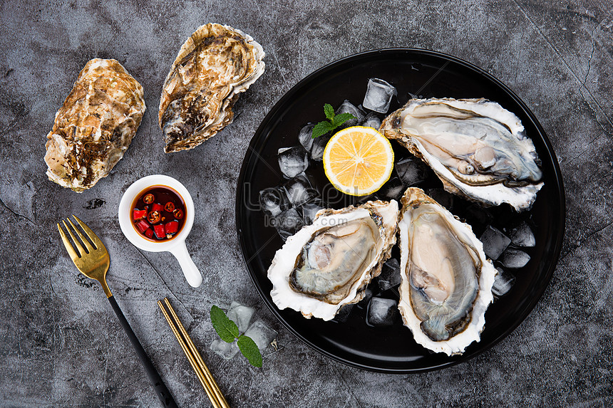 neatly arranged oysters